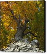 Falling Tree Canvas Print