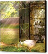 Farm - Geese -  Birds Of A Feather Canvas Print by Mike Savad