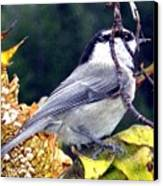 Feast For A Chickadee Canvas Print