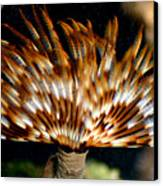 Feather Duster Canvas Print