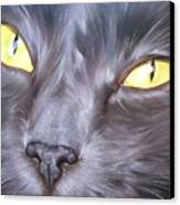 Feline Face 1 Canvas Print
