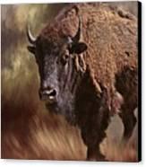 Female Buffalo Canvas Print by Stephanie Calhoun