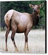 Feme Elk Canvas Print