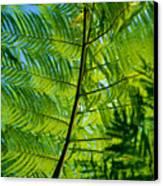 Fern Detail Canvas Print by Himani - Printscapes