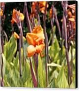 Field For Iris Canvas Print