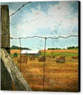 Field Of Freshly Cut Bales Of Hay Canvas Print
