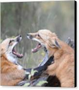 Fight For Dominance Canvas Print