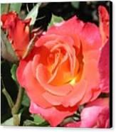 Firey Passion Rose Canvas Print