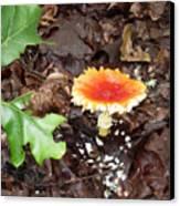 Firey Topped Mushroom Canvas Print