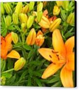 First Orange Lillies Canvas Print