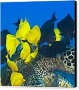 Fish Cleaning Turtle Canvas Print by Dave Fleetham - Printscapes