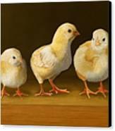 Five Chicks Named Moe Canvas Print by Bob Nolin