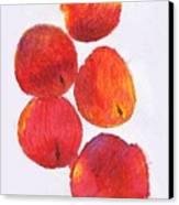 Five Nectarines  Canvas Print by Andy  Mercer