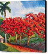 Flamboyans Canvas Print