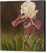 Flaming Bearded Iris Canvas Print