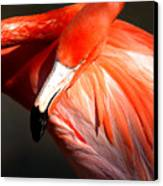 Flamingo - Over The Shoulder Canvas Print