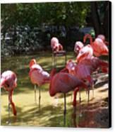 Flamingo Land Canvas Print