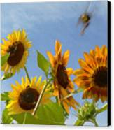 Flight Of The Bubble Bee Canvas Print