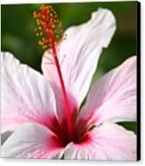 Flower Beauty2 Canvas Print by Riad Belhimer
