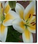 Flower Close Up 5 Canvas Print