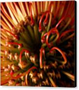 Flower Hawaiian Protea Canvas Print