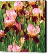 Flower - Iris - Gy Morrison Canvas Print by Mike Savad