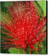 Flower Optics 3 Canvas Print