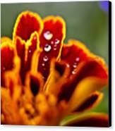 Flower Rain Drops Canvas Print