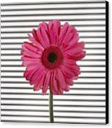 Flower With Lines Canvas Print