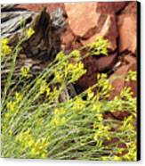 Flower Wood And Rock Canvas Print