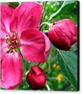Flowering Crab Apple Canvas Print