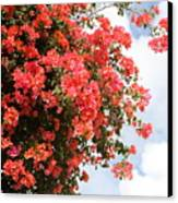 Flowering Tree Canvas Print