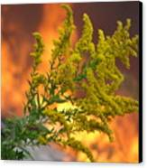 Flowers And Flames Canvas Print