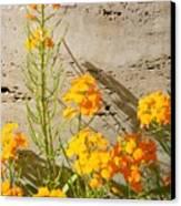 Flowers Orange Canvas Print by Warren Thompson
