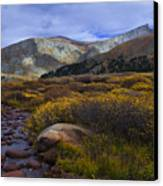 Flowing From Bierstadt Canvas Print by Barbara Schultheis