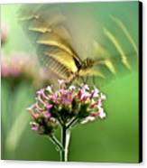 Fluttering Butterfly Canvas Print by Heiko Koehrer-Wagner