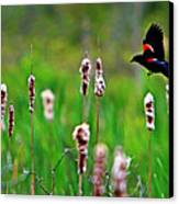 Flying Amongst Cattails Canvas Print