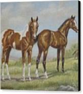 Foals In Pasture Canvas Print by Dorothy Coatsworth