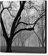 Fog 2 Canvas Print by Beverly Hammond