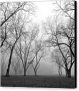 Fog 3 Canvas Print by Beverly Hammond