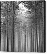 Foggy Forest Canvas Print by Svetlana Sewell
