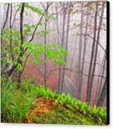 Foggy Misty Spring Morning Canvas Print by Thomas R Fletcher