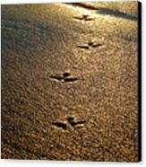Footprints - Bird Canvas Print