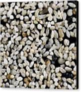 Foraminiferan Tests Canvas Print