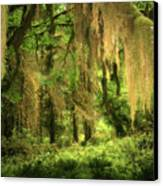 Forest Fantasy - Quinault - Gateway To Paradise On The Olympic Peninsula Wa Canvas Print