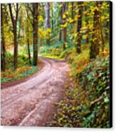 Forest Footpath Canvas Print by Carlos Caetano