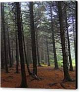Forest Canvas Print by Judy  Waller