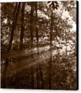 Forest Mist B And W Canvas Print by Steve Gadomski