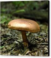 Forest Mushroom Canvas Print