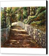 Forest Path White Cliff Canvas Print